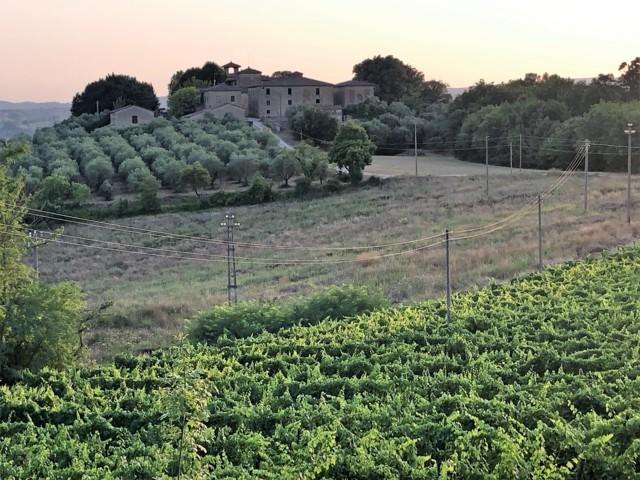 Villa Migone: vigneti e ulivi