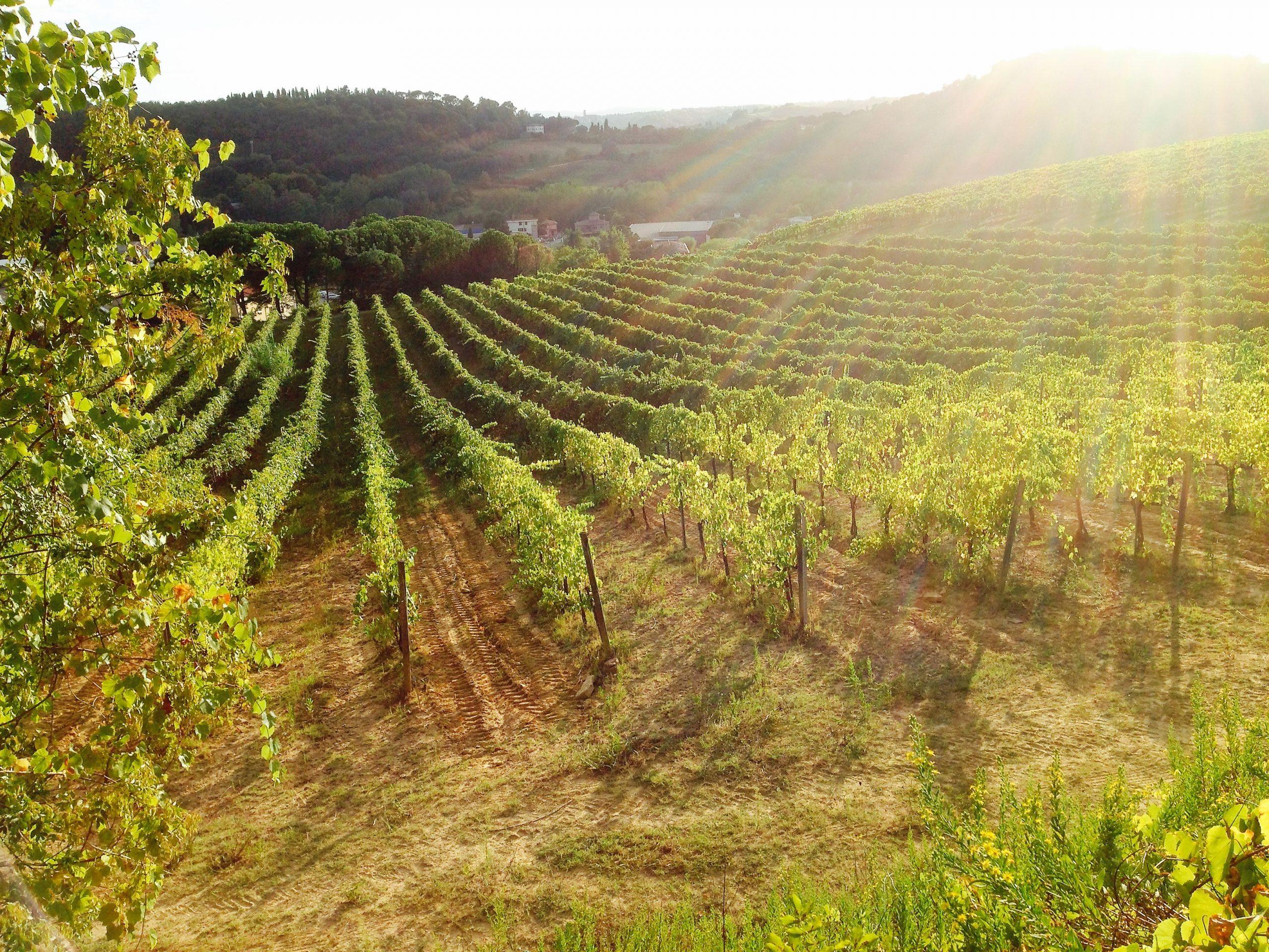 Villa Migone: vini del Chianti
